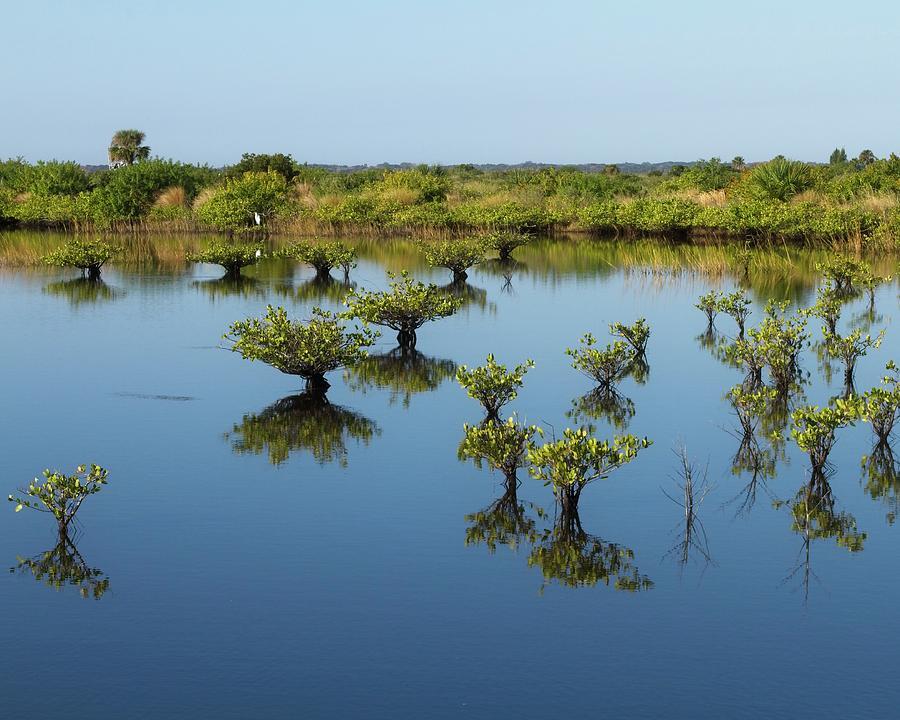 Mangrove Nursery #2 by Paul Rebmann
