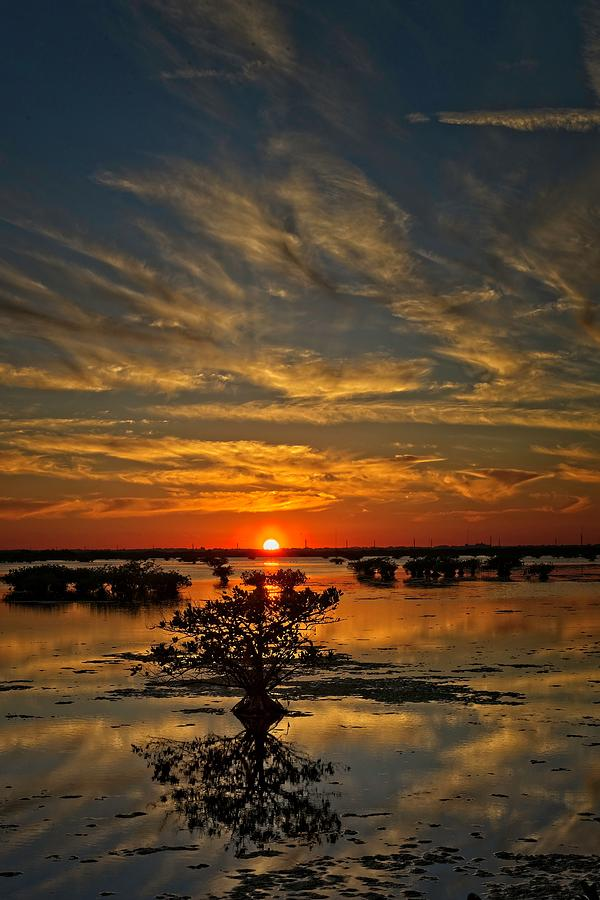 Mangrove Sunset by Roy Thoman