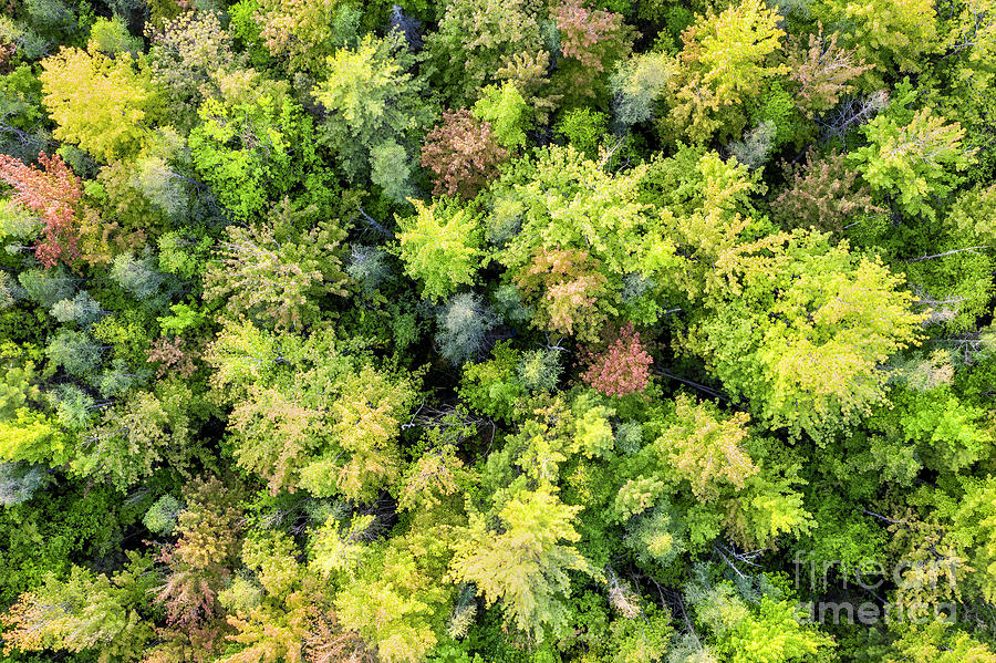 Manistee River Photograph - Manistee Forest From Above by Twenty Two North Photography