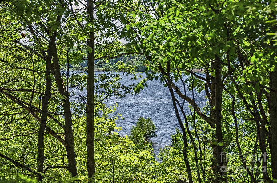 Manistee Lake Through the Trees by Sue Smith