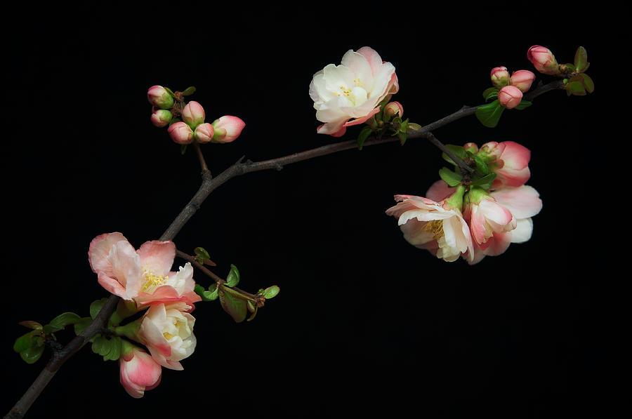 Manzano Photograph - Manzano Silvestre En Flor by Antonio Rodr�guez Maldonado