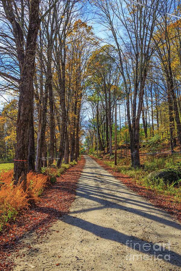 Maple Photograph - Maple Lane Old Fairgrounds Road Nh by Edward Fielding