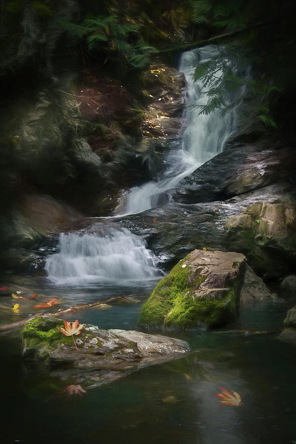 Maple leaf falls by David Brookwell