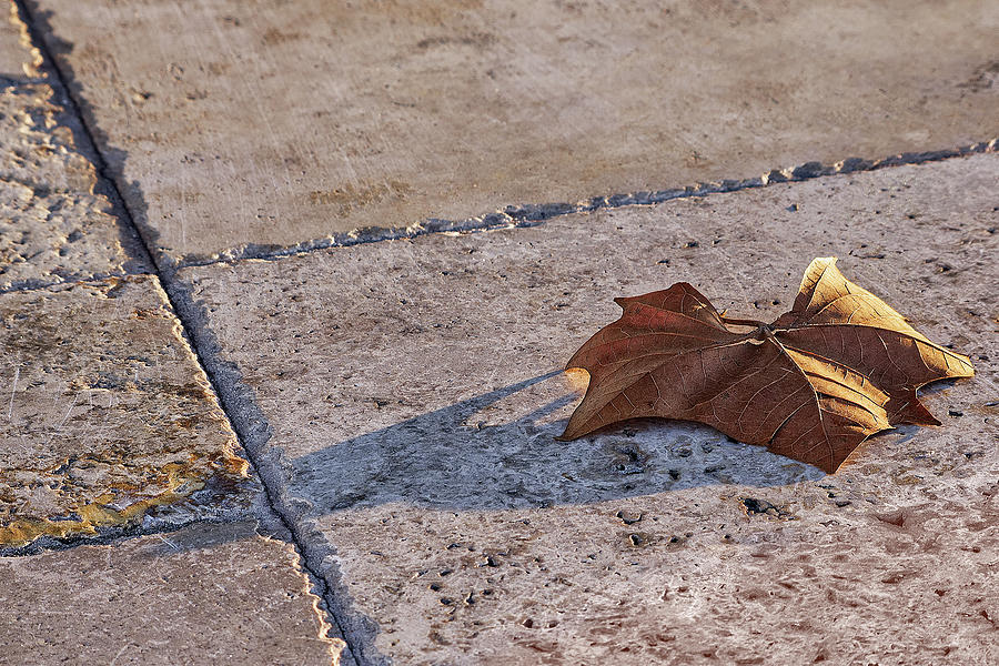 Maple Leaf on Travertine by Richard Rizzo