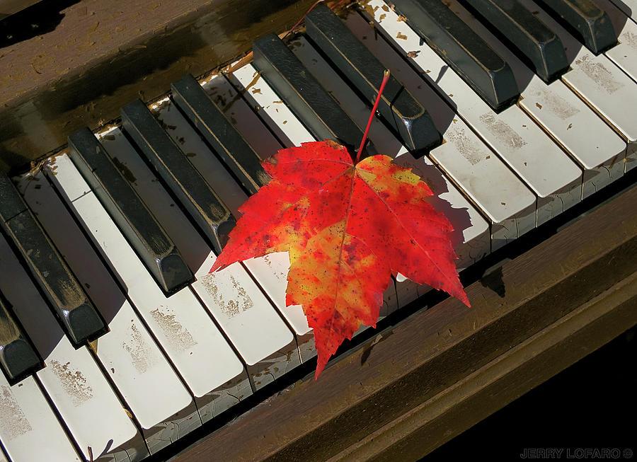 Maple Leaf Photograph - Maple Leaf Rag by Jerry LoFaro