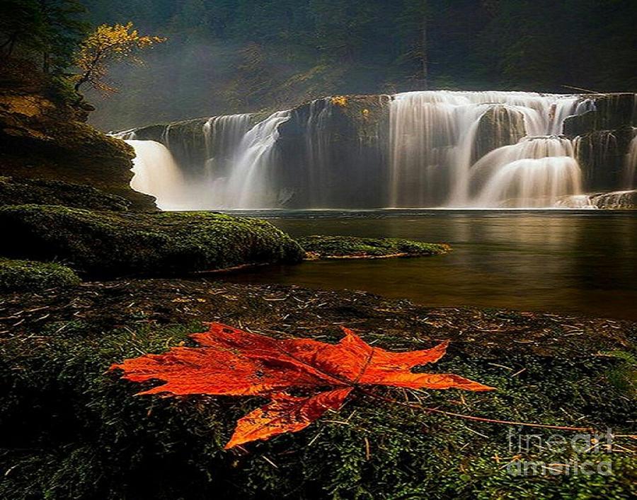 Maple Leaf by Rod Jellison