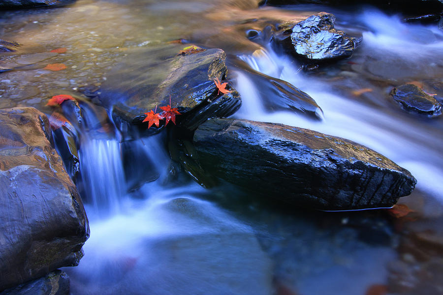Tranquility Photograph - Maple Leaves In Stream by Samyaoo