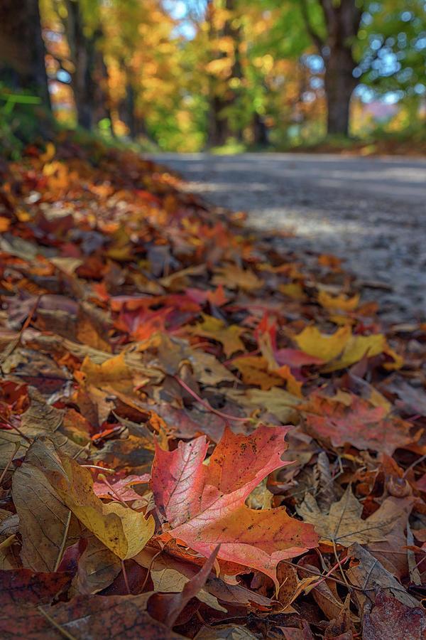 Maple Leaves by Kristen Wilkinson