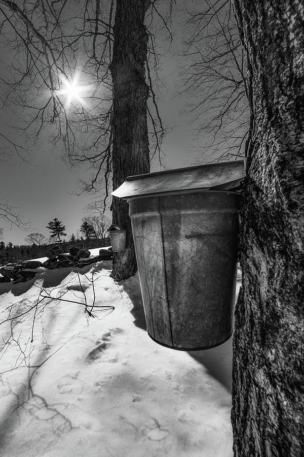 Maple Sap Bucket by Joann Vitali