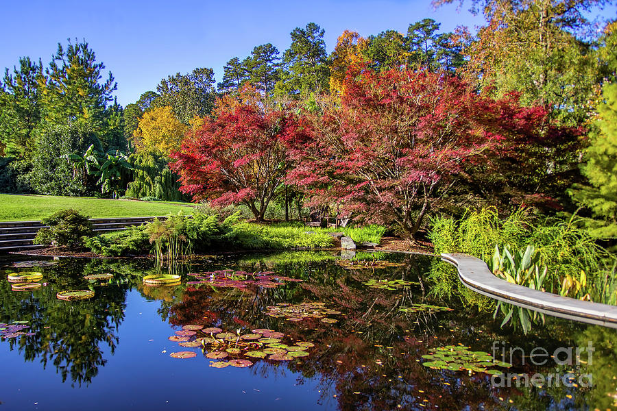 Maple Photograph - Maple Tree Pond by James Foshee