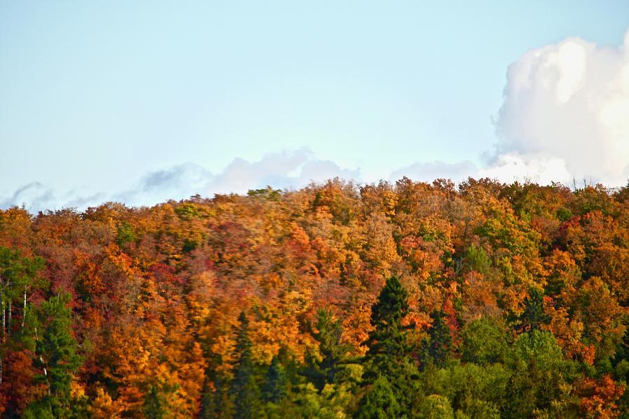 Maples In Red in Lusten by Hella Buchheim