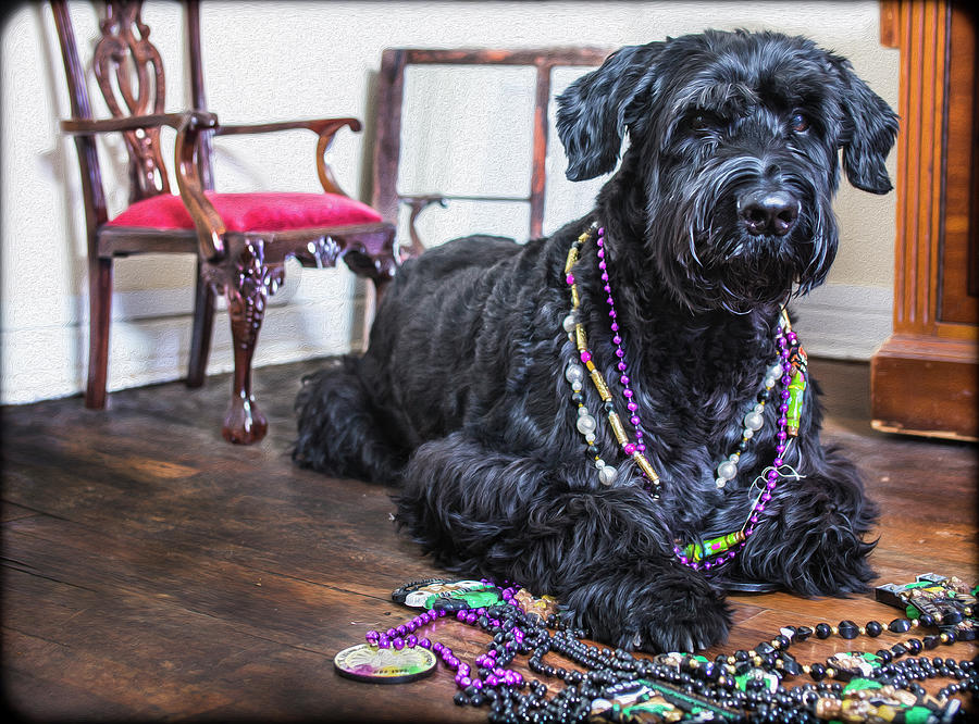 Mardi Gras Dog  by SL Ernst