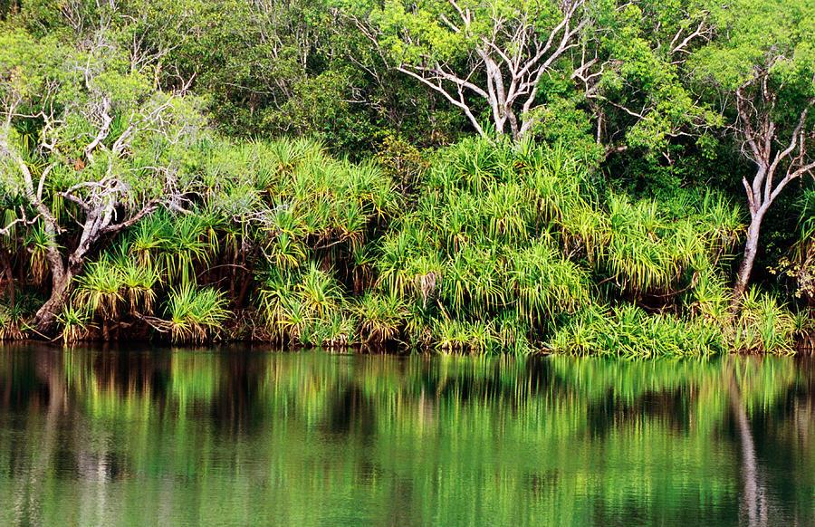 Mardugal Billabong, Kakadu National Photograph by John Banagan