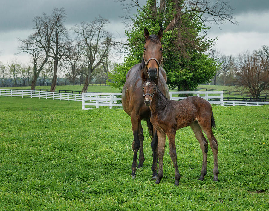 Horses Photograph - Mare And Foal 2 by Galloimages Online