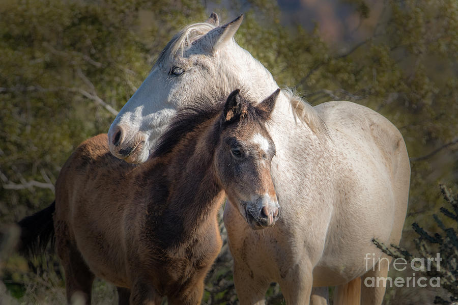 Mare and Foal by Lisa Manifold