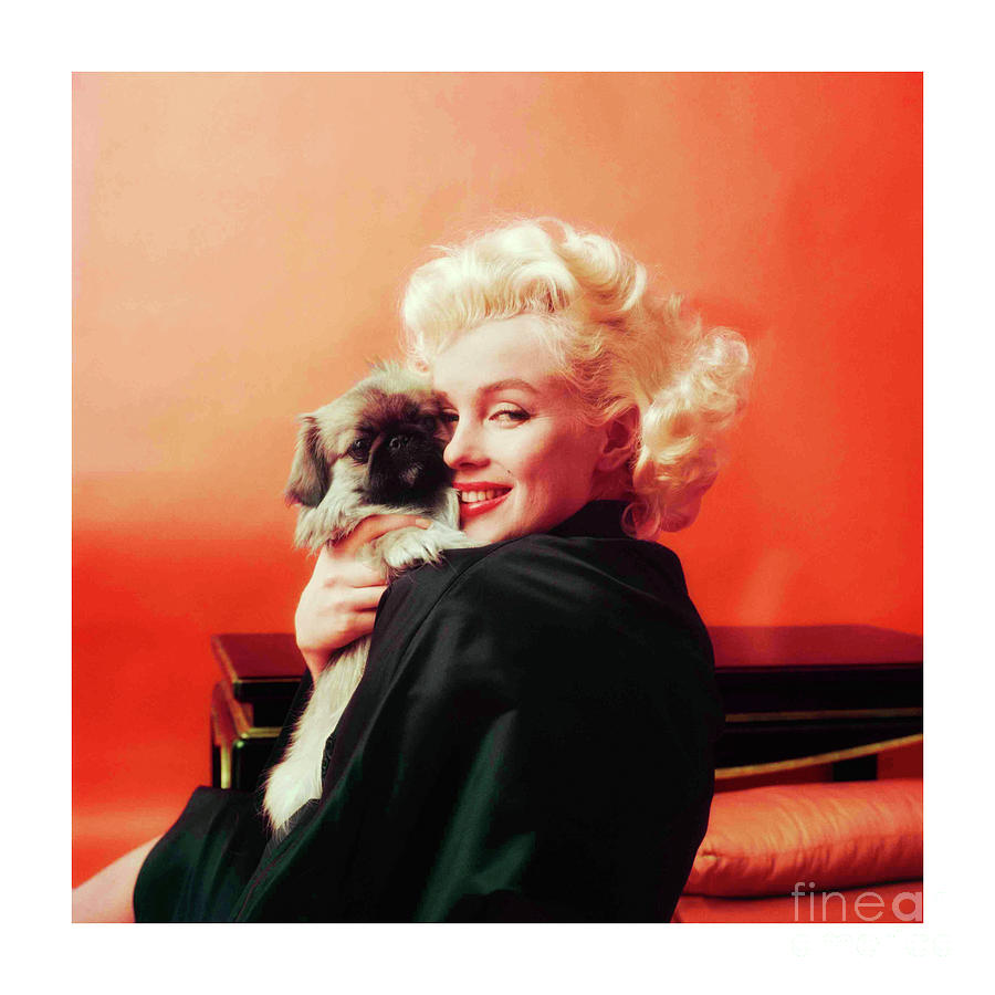 Marilyn Monroe Goes Oriental With Her Pekingese Dog in NY - 1962 by Doc Braham