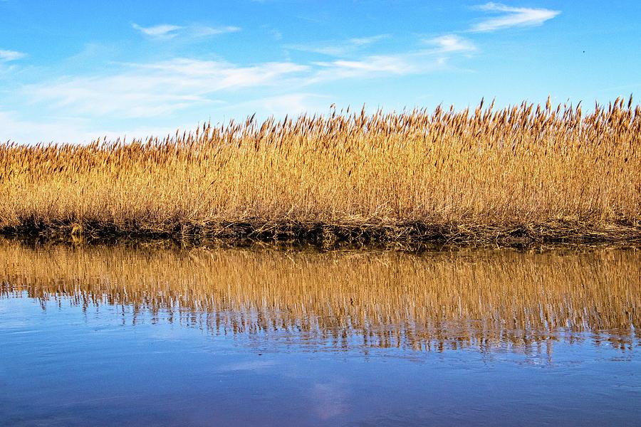 Marsh Grass Reflections by Carolyn Derstine