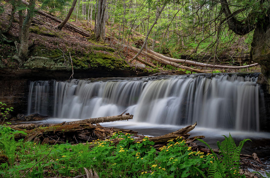 Marsh marigolds at Mosquito Falls by Gary McCormick