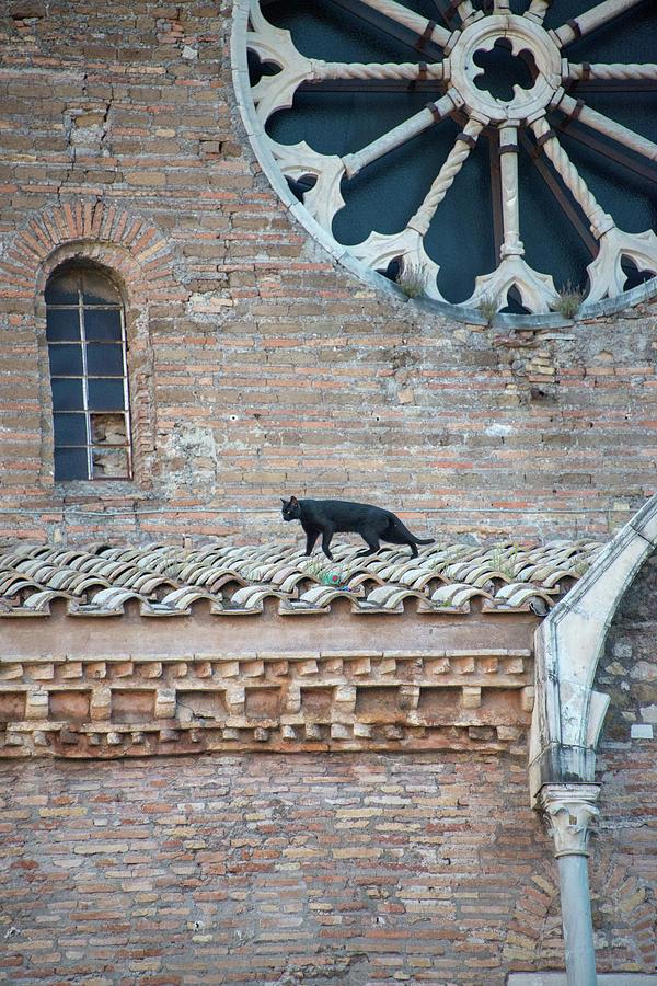 Italia Photograph - Marys Cat by Joseph Yarbrough