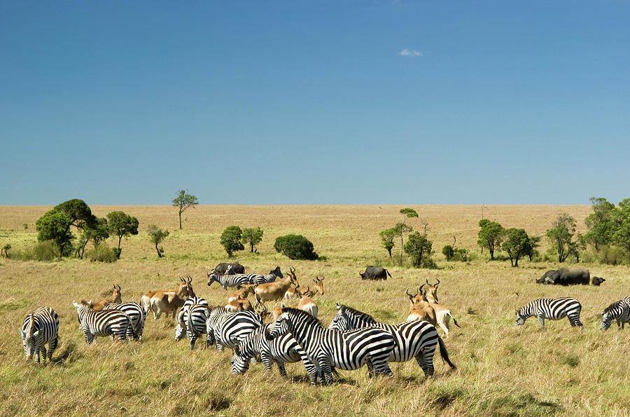 Masai Mara Photograph by Mac99