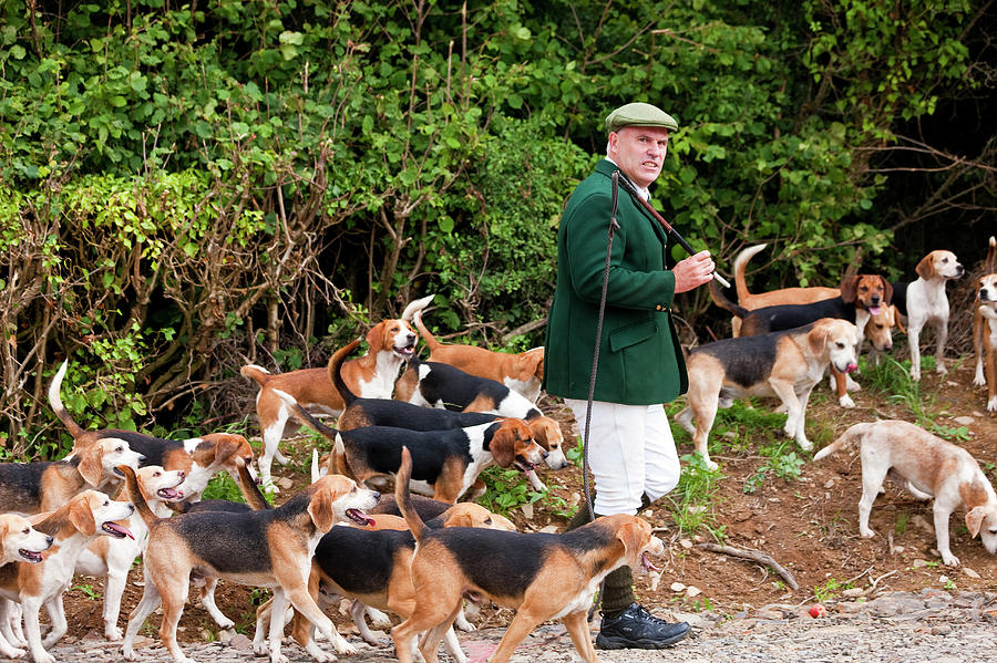 Master Of The Hounds, Fox Hunt, Devon Photograph by Peter Adams
