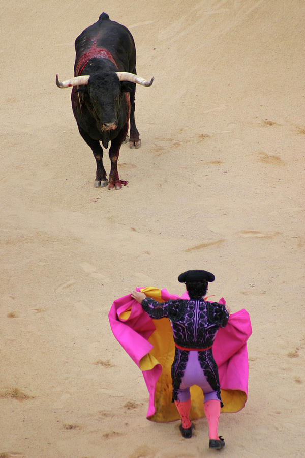 Matador Fighting Bull In Plaza De Toros Photograph by Dominic Bonuccelli