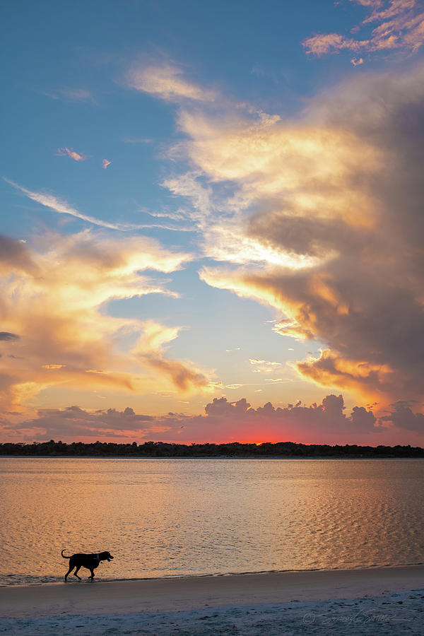 Matanzas Inlet sunset dog walk by Stacey Sather