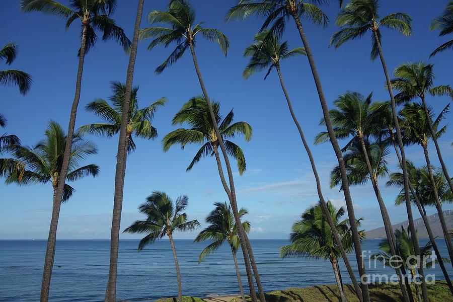 Maui Paradise by Wilko Van de Kamp