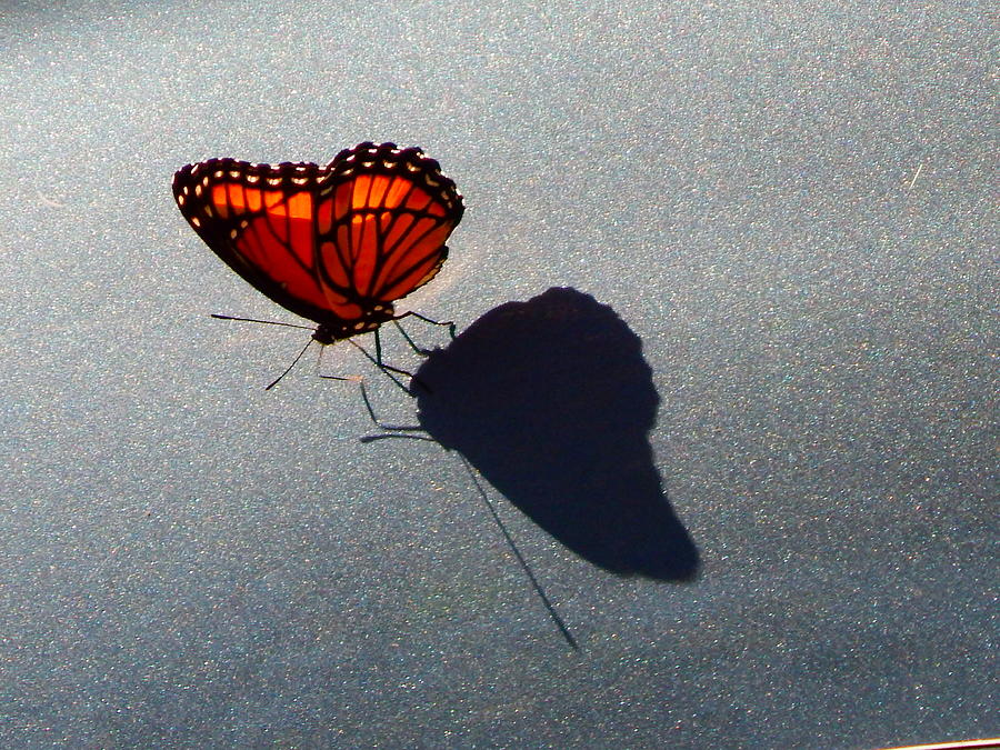 me and my shadow by Virginia Kay White