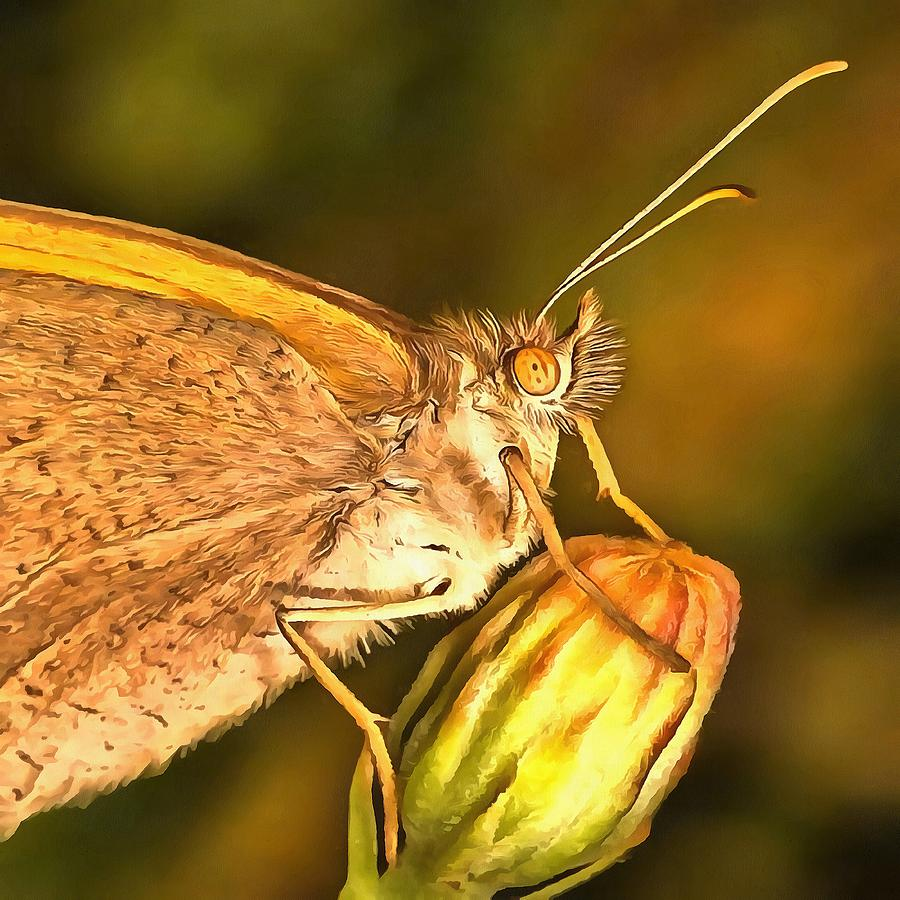 Meadow Brown Beautiful Butterfly Portrait by Taiche Acrylic Art