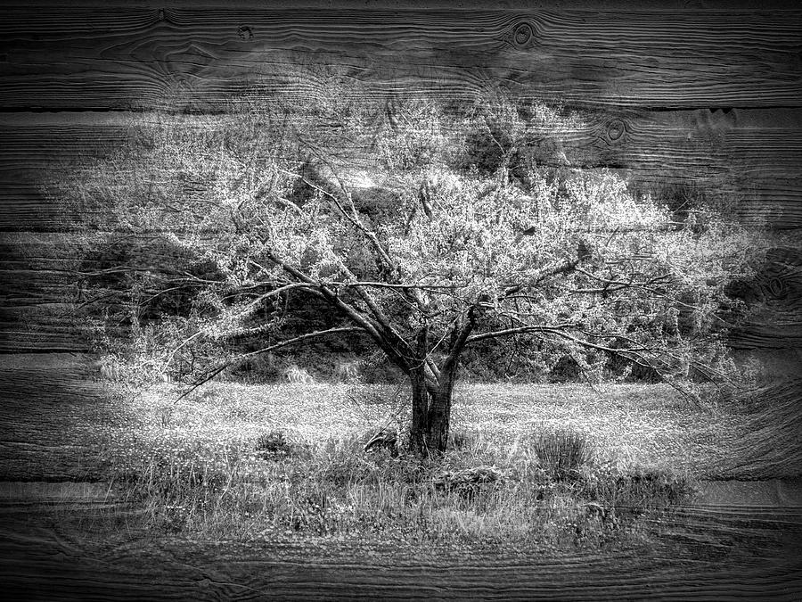 Meadow in Black and White by Debra and Dave Vanderlaan