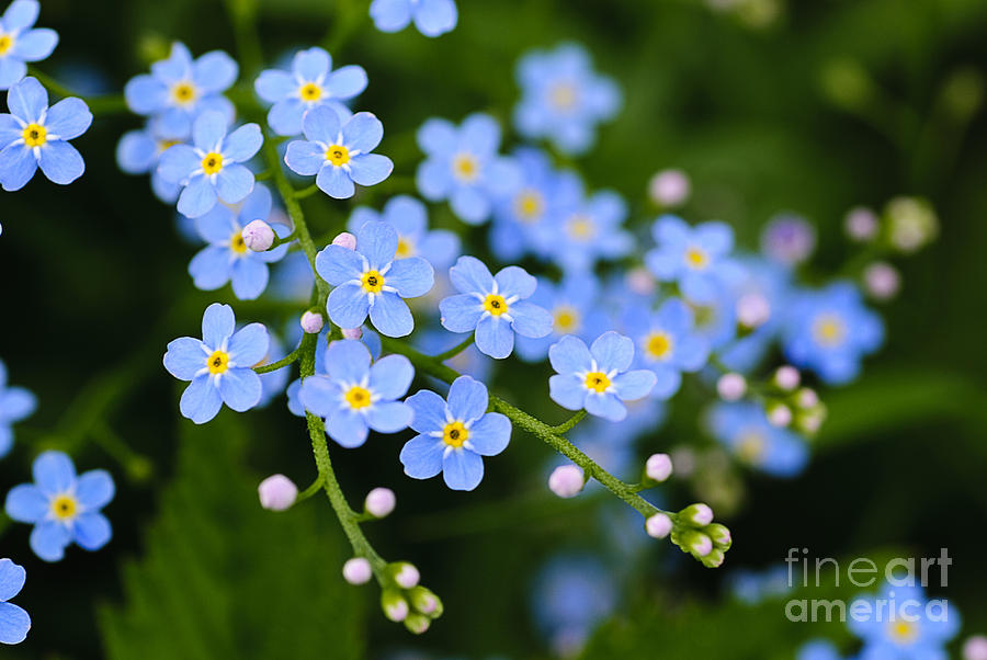 Small Photograph - Meadow Plant Background Blue Little by Oksana Shufrych