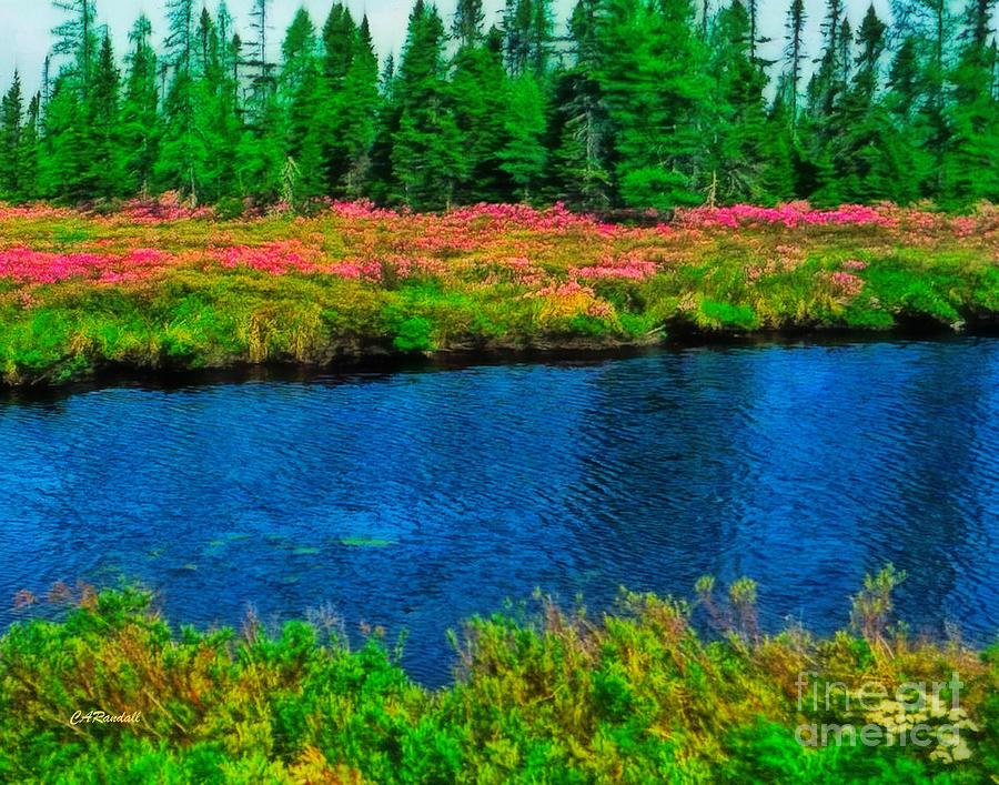 Meadow Stream  by Carol Randall