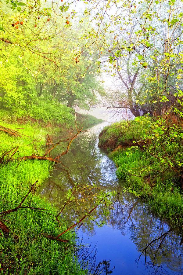 Carolina Photograph - Meandering Through The Forest Glen by Debra and Dave Vanderlaan