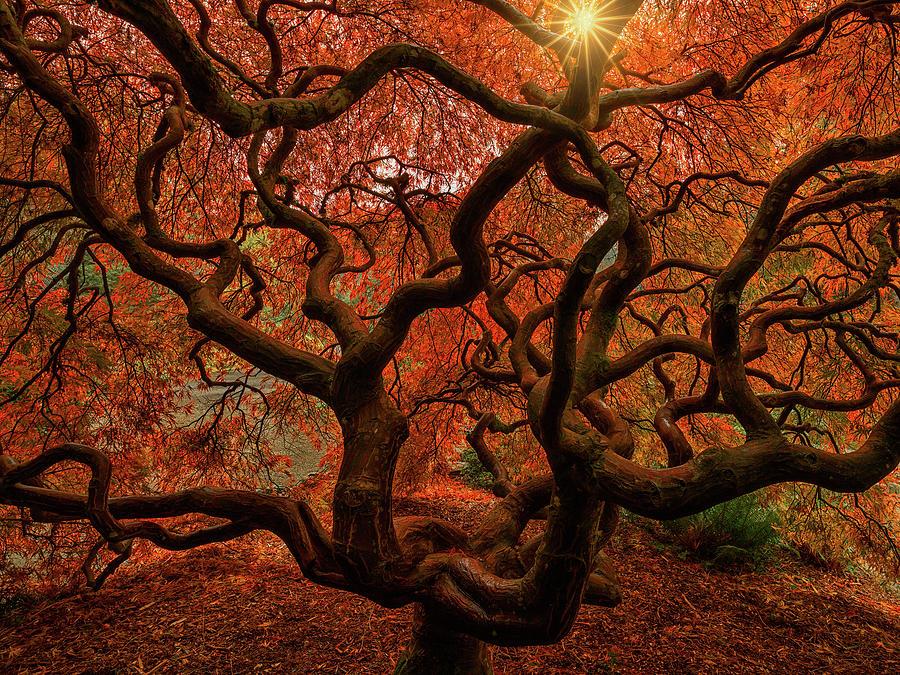Medusa by Dan Mihai
