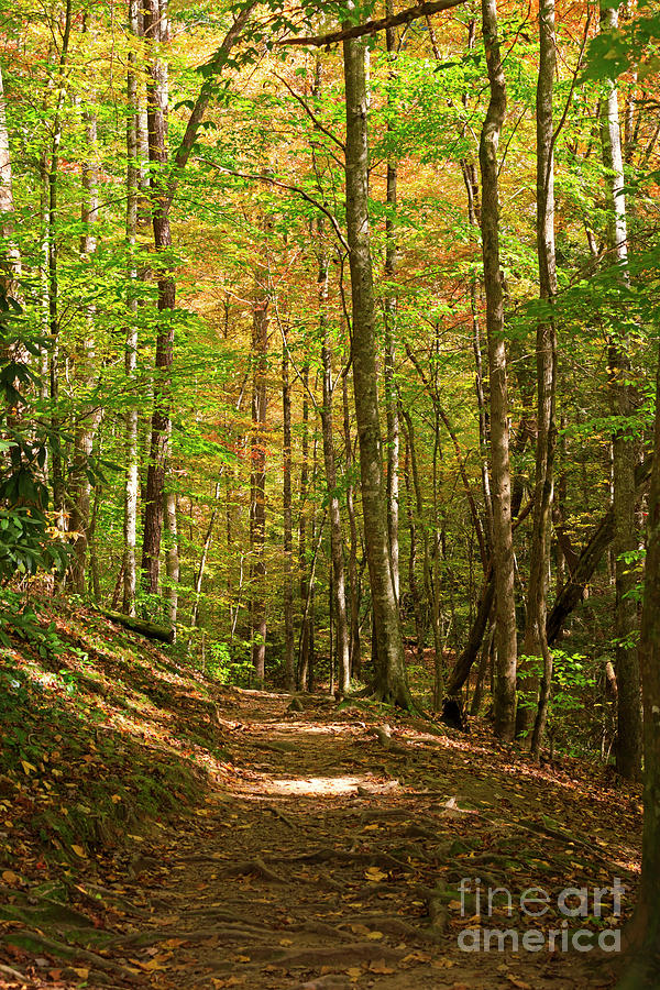 Path Photograph - Meigs Creek Trailhead In Smoky Mountains National Park by Louise Heusinkveld
