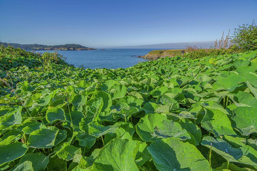 Mendocino Coastal Plants by Jonathan Hansen
