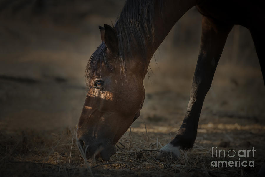 Mesquite Canapy Light by Lisa Manifold