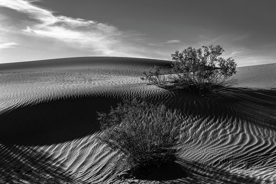 Mesquite Flats Sand Dunes in Black and White by Don Hoekwater Photography