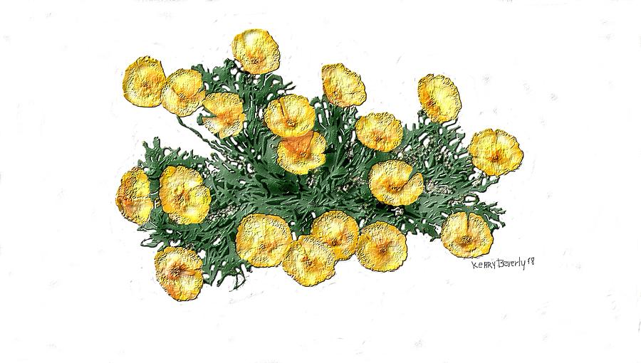 Mexican Gold Poppies by Brandy Beverly