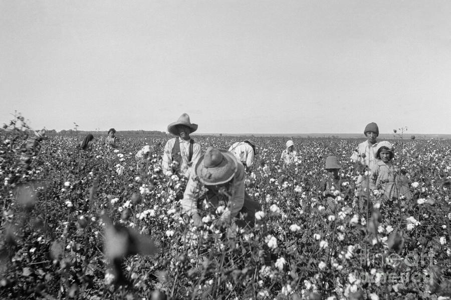 Mexican Workers In Texas Field Photograph by Bettmann