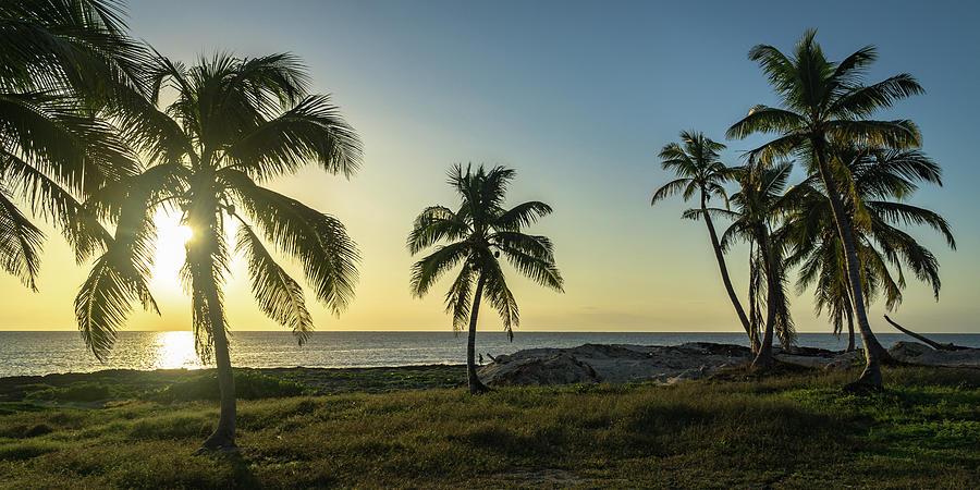 Mexico Palm Tree Sunrise by Dave Matchett