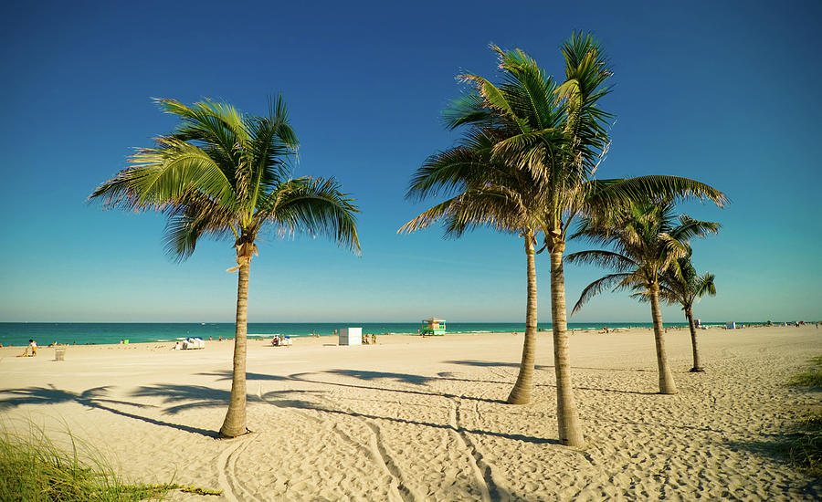 Miami Beach Palms Photograph by Thepalmer