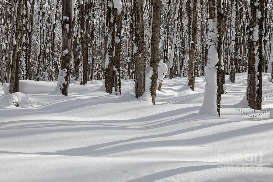 Shadow Photograph - Michigan Winter by Jim West