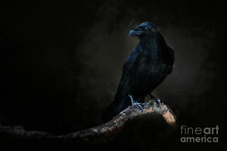 Midnight Corvid by Jim Hatch