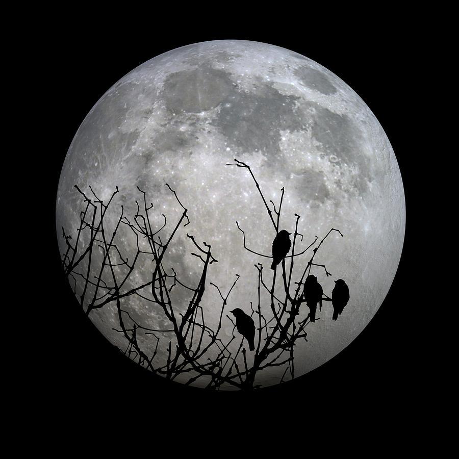 Full Photograph - Midnight Moonshiners  by Betsy Knapp