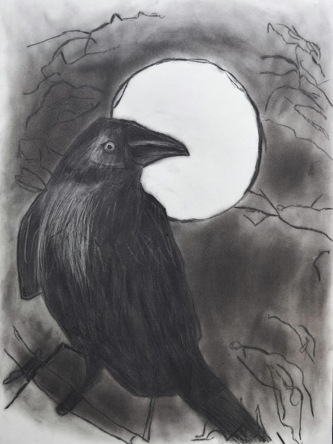 Crow Drawing Drawing - Midnight by Nadija Armusik