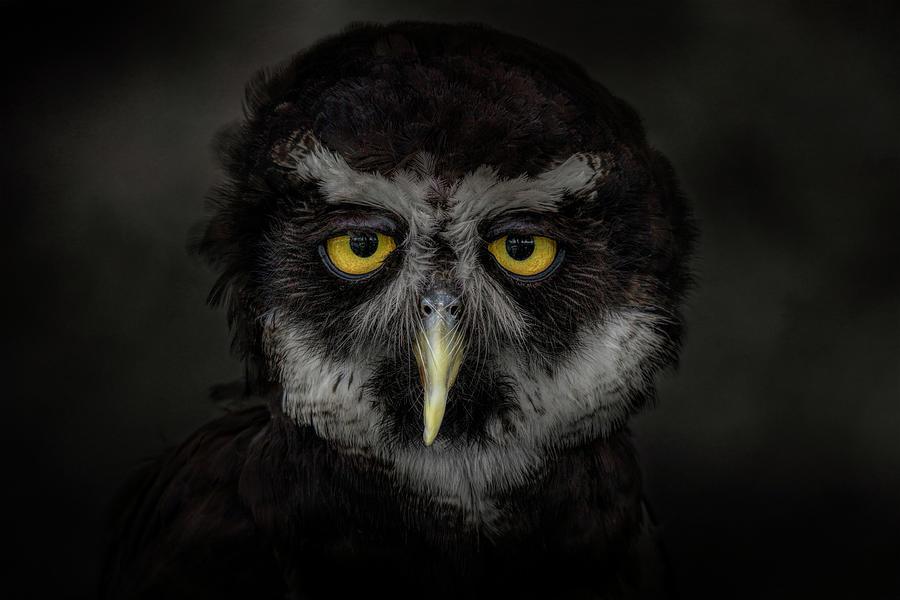 Midnight Spirit  by Kelley Parker