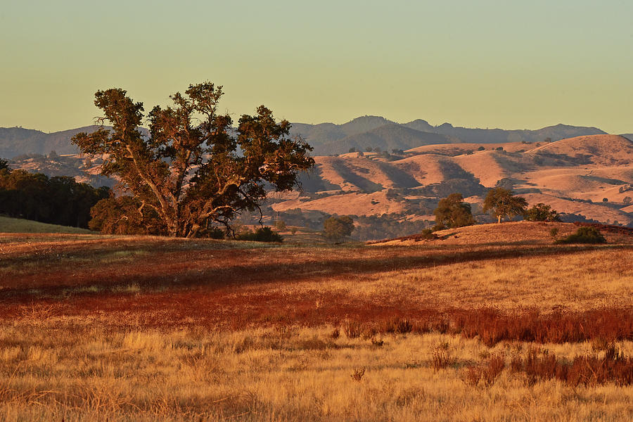 Mighty Oak and Golden Hills by Cindy McIntyre