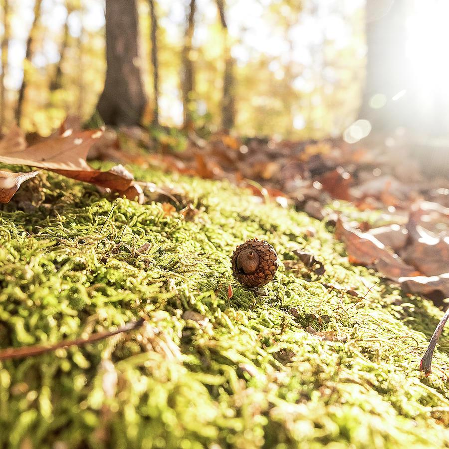 Mighty Oaks from Little Acorns Grow by Jon Woodhams